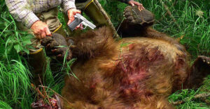 Man Defends Clients From Alaskan Grizzly Attack