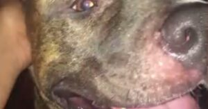 Dog Said To Be Sicked On Repo Man, Had No Choice But To Shoot